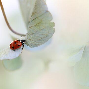 Ladybird on green-blue hydrangea by Ellen