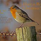"""RUSTY ROBIN"" MERRY CHRISTMAS! by NICK COBURN PHILLIPS"