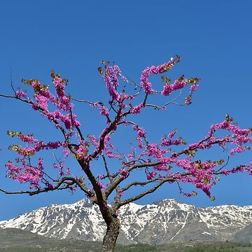 Spring in Massif Central, Corsica, France by kasianowak