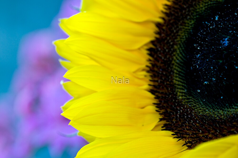 Sunflower by Nala