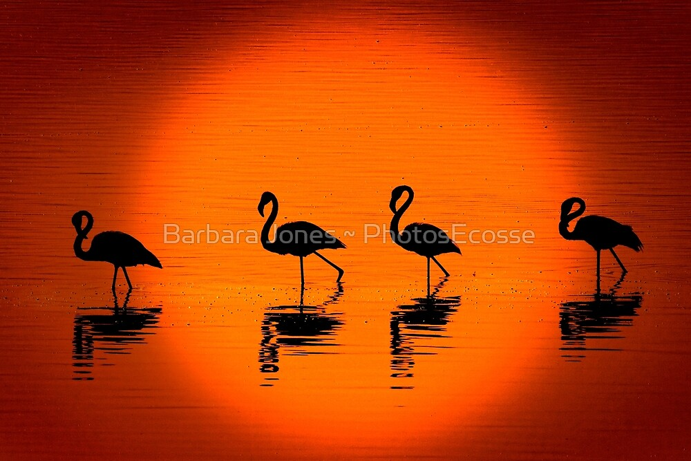 Flamingos at Sunset, Nakuru National Park, Kenya. Africa. by PhotosEcosse