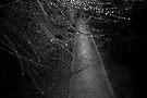 Tear Drops by Paul Louis Villani