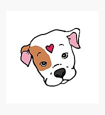 Brown/White Sweet Pit Bull Face with Heart Photographic Print