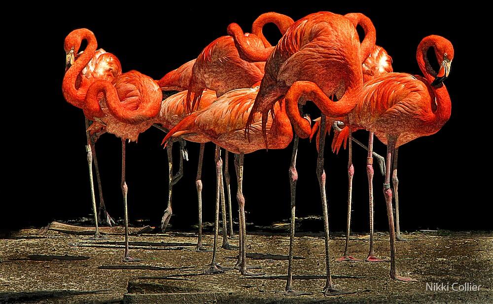 Flock of Flamingos by Nikki Collier