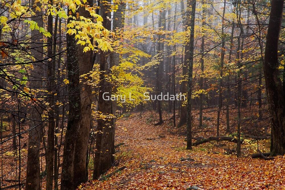 Foggy Fall Walkway by Gary L   Suddath