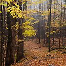 Foggy Fall Walkway by Gary L   Suddath