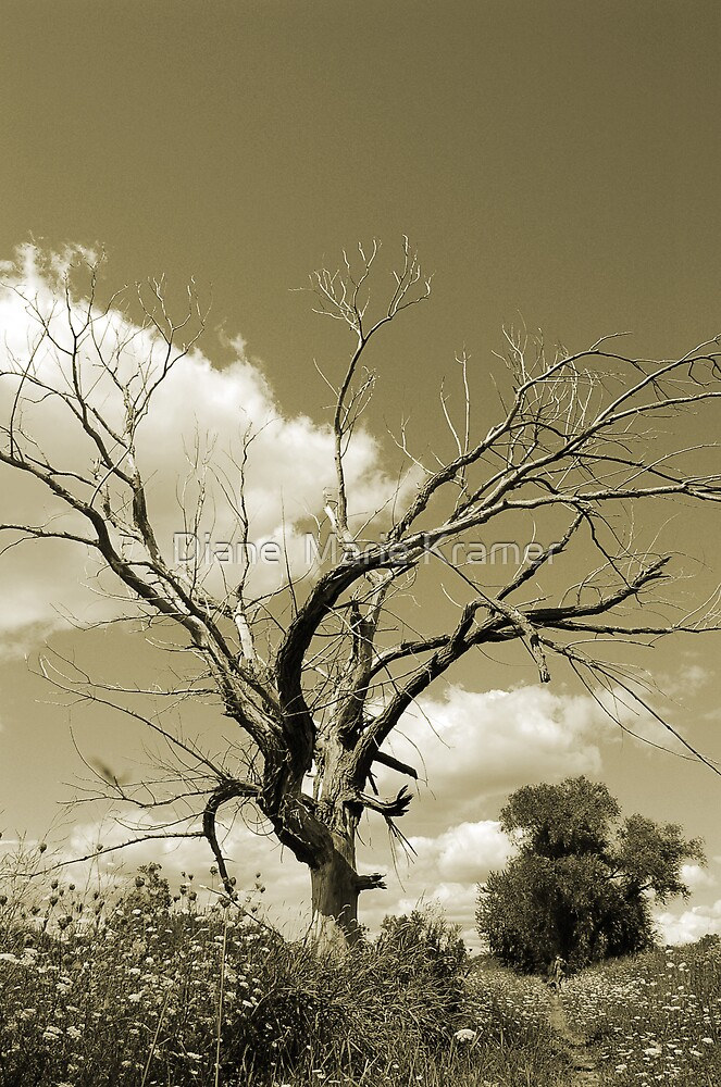 The Old Tree- Sepia tones by Diane  Marie Kramer
