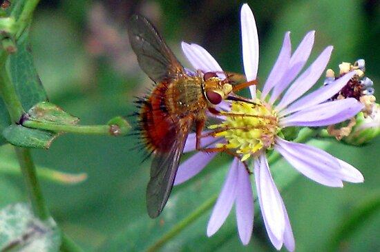 Taste of Honey by Jan Landers