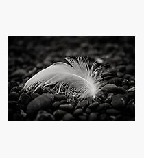 """""""White Feather"""" Photographic Print"""