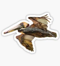 Brown Pelican Flight with Vintage Seafoam Stripe (California Bird) Sticker