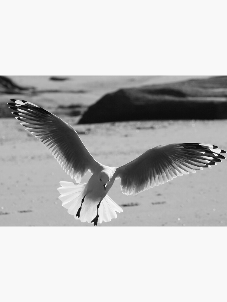 Seagull landing by theoddshot