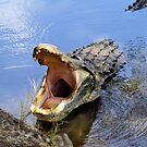 Alligator Growl by Rosalie Scanlon