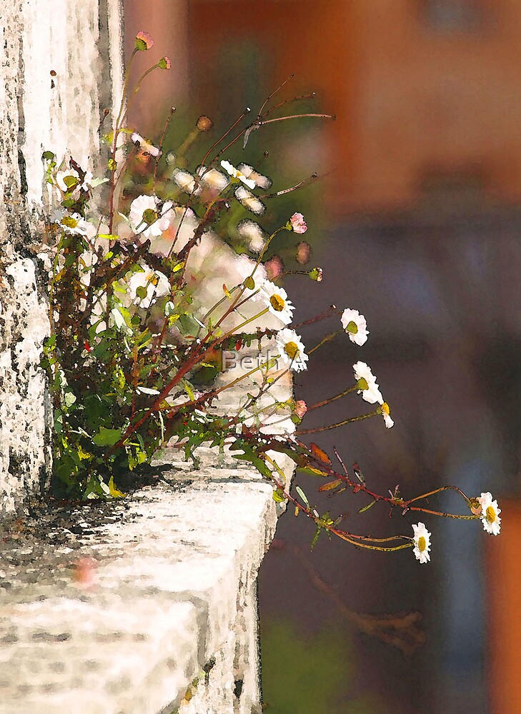 Nature and the Spanish Steps by Beth A