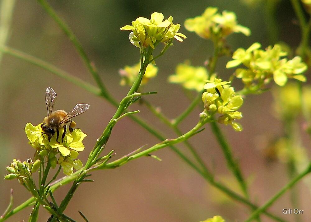 Bee-zee by Gili Orr