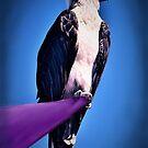 Osprey by Kestrelle