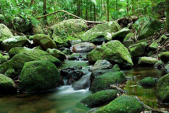 Mossman Gorge by Stephen Colquitt