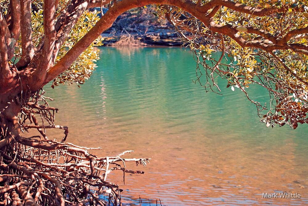 Under Mangrove by Mark Whittle