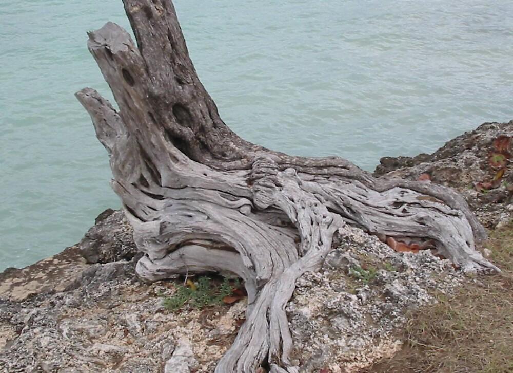 tree stump by juliecronin