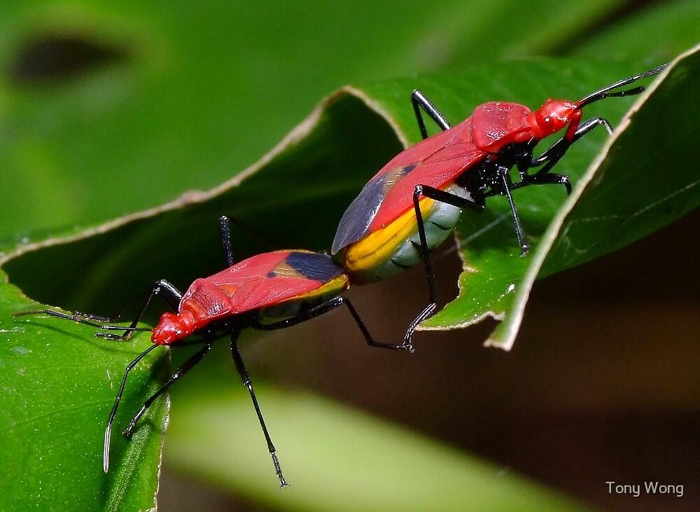 Lovebugs... by Tony Wong
