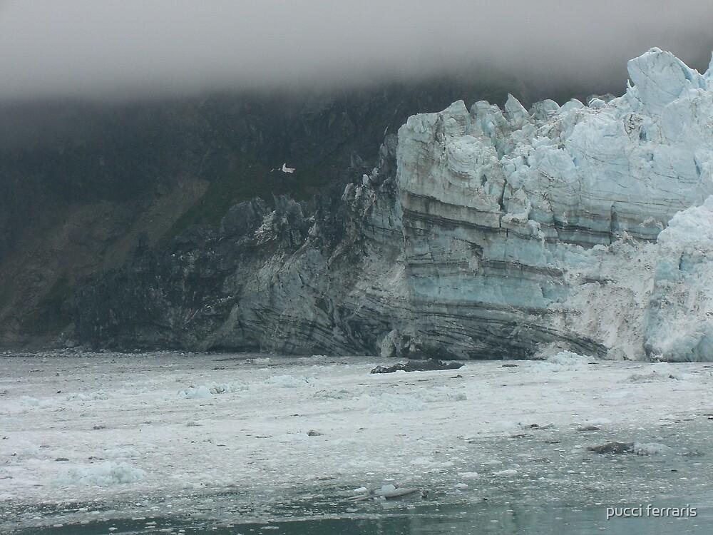 glacier bay alaska by pucci ferraris