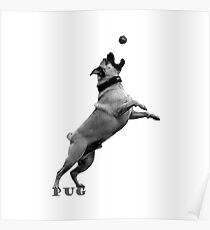 PUG Dog in Action: Gray scale Logo Poster