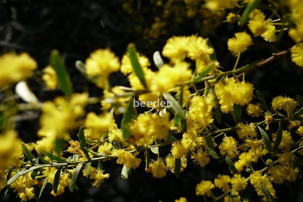 NL- Acacia Blossoms 2 by beeden
