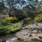 Creek on the Woodlands Historical Park - Bulla by Colin  Ewington