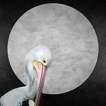 Pelican by GavinScott