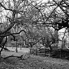Orchard by VanOostrum