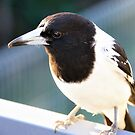 Butcher Bird by cs-cookie