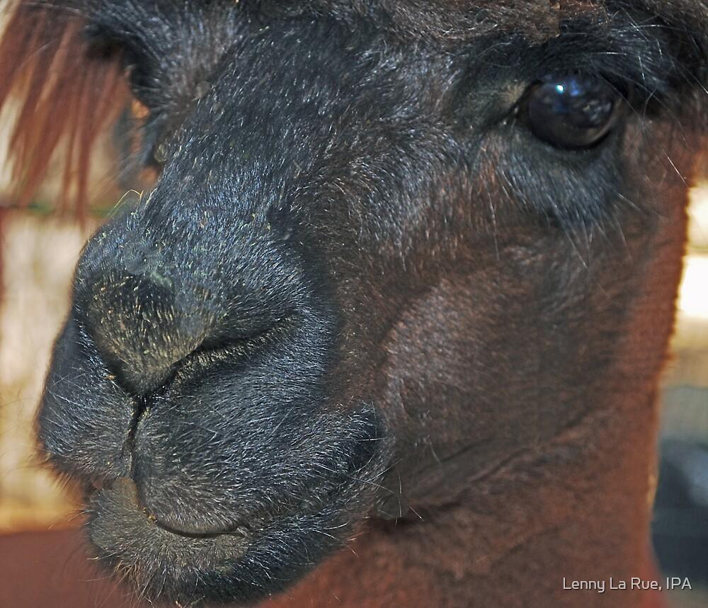 Face-to-alpaca face by Lenny La Rue, IPA