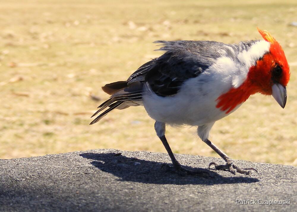 Bird on a table  by Patrick Czaplewski