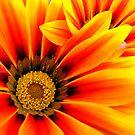 orange by Jon Baxter