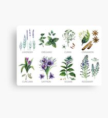 Watercolor botanical collection of herbs and spices Canvas Print