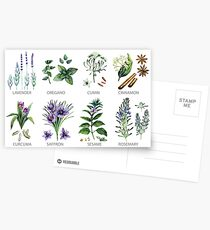 Watercolor botanical collection of herbs and spices Postcards