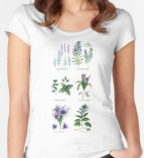 Watercolor botanical collection of herbs and spices Fitted Scoop T-Shirt