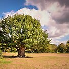 The big tree by JEZ22
