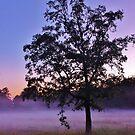 Misty Morning by JoAnn GLENNIE