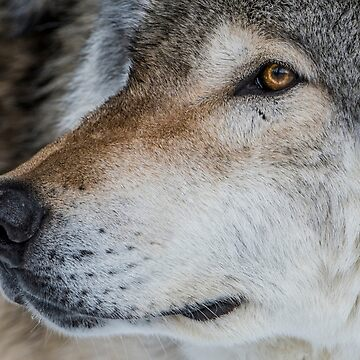 Timber Wolf by jaydee1400
