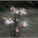 A Rush of Columbine by Wayne King