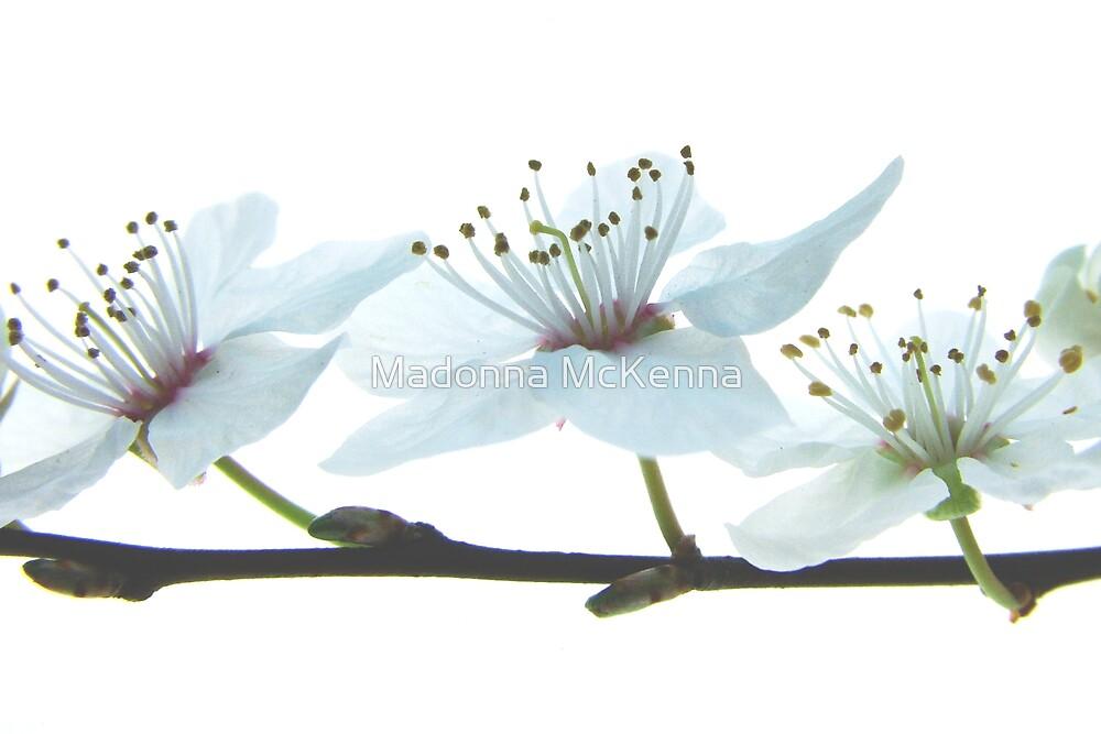 """""""Paper Petals 2"""" by Madonna McKenna"""