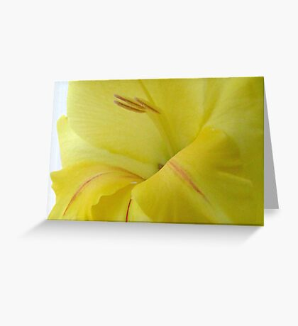 More Yellow Glads Greeting Card