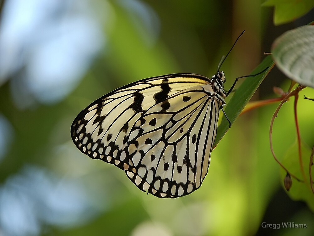 Rice Paper Butterfly by Gregg Williams