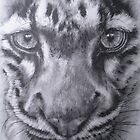 Up Close Clouded Leopard by BarbBarcikKeith