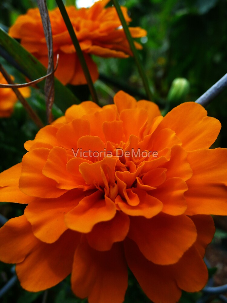 In Living Color by Victoria DeMore