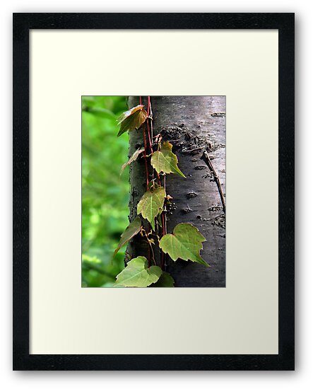 Climbing the Silver Birch by Len Bomba