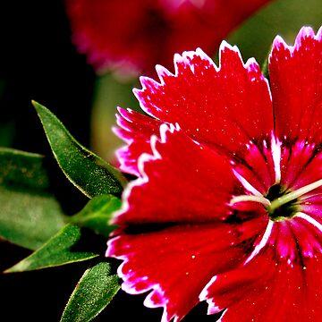 Summer Bloom by divine9