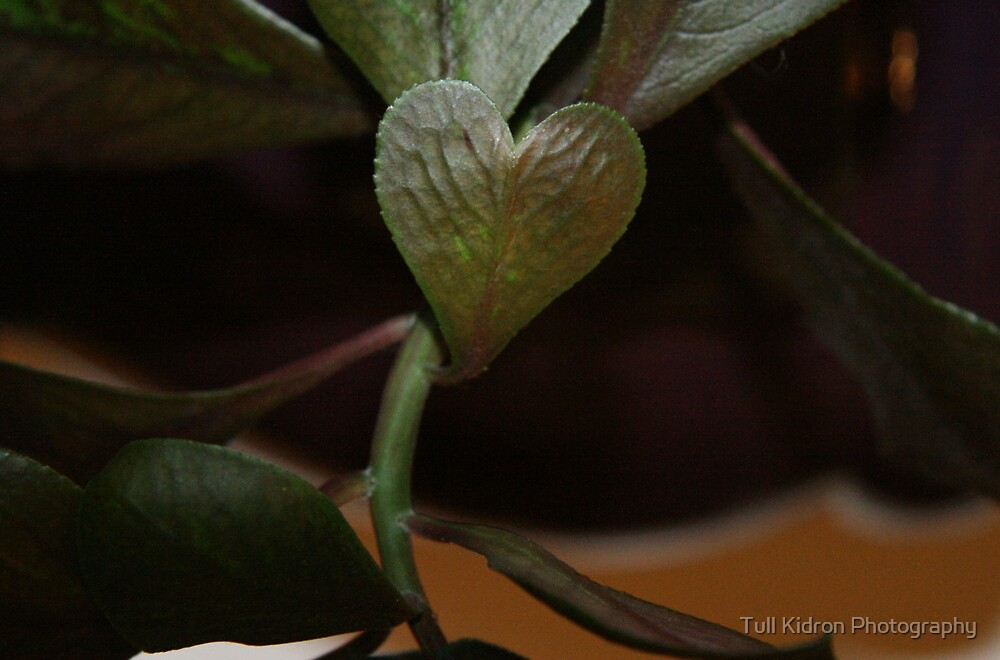 I [heart] Leaf (2007) by Tull Kidron Photography