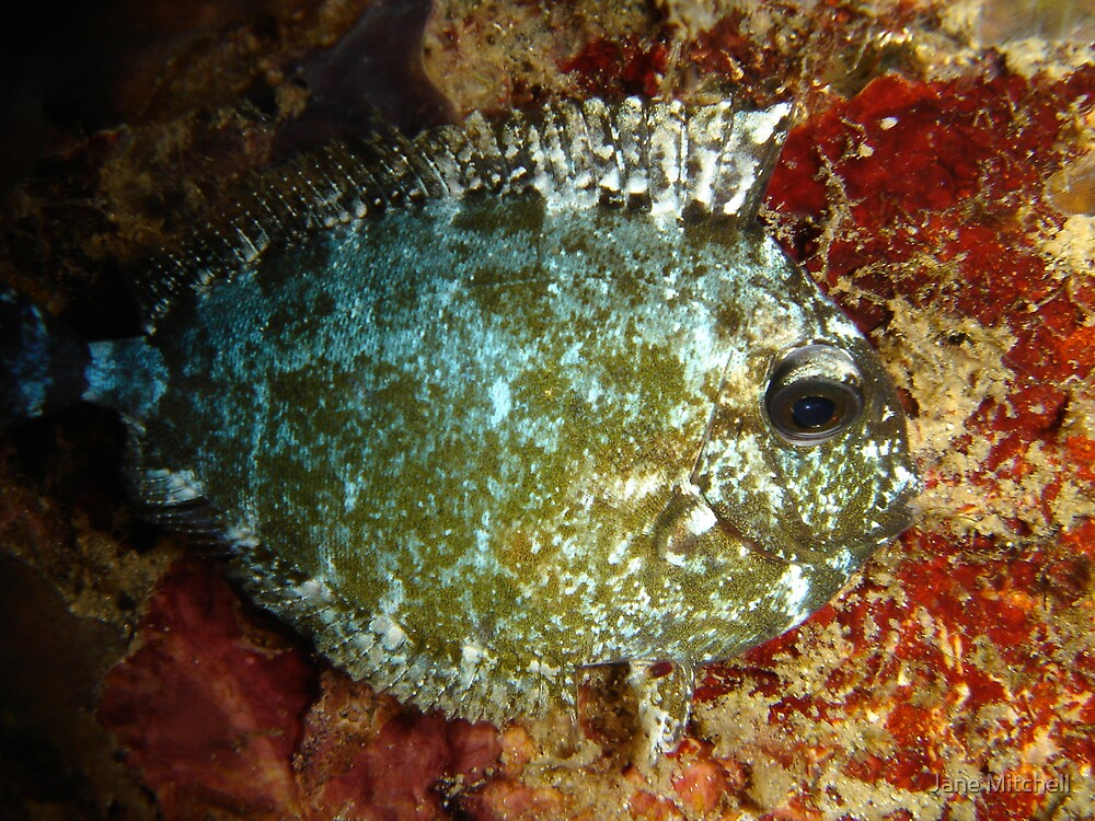 Sleeping Fish by Jane Mitchell