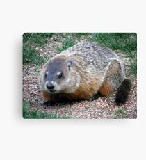 Chuck, the Groundhog Canvas Print